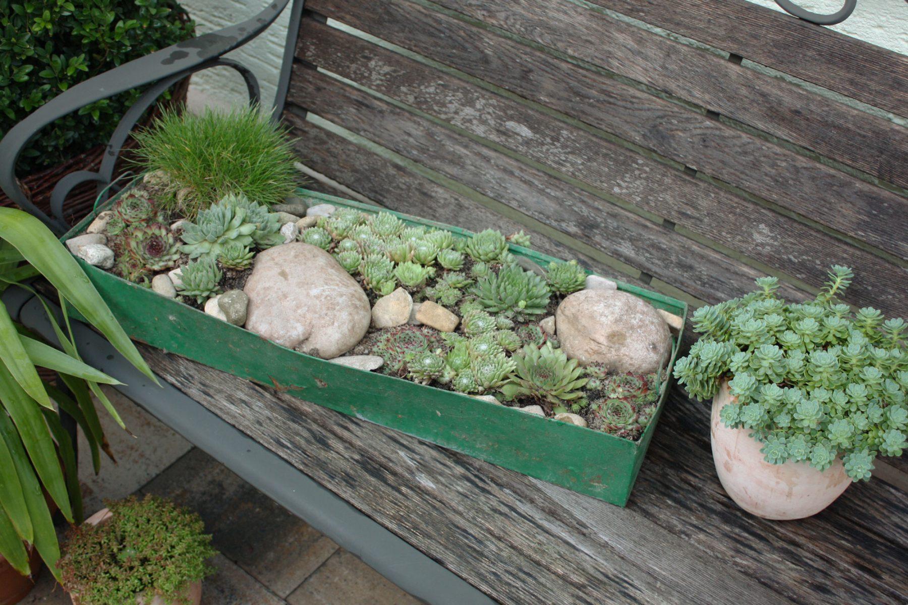 Berühmt Pflegeleichte Pflanzschale für Terrasse und Balkon - Native Plants &JE_42