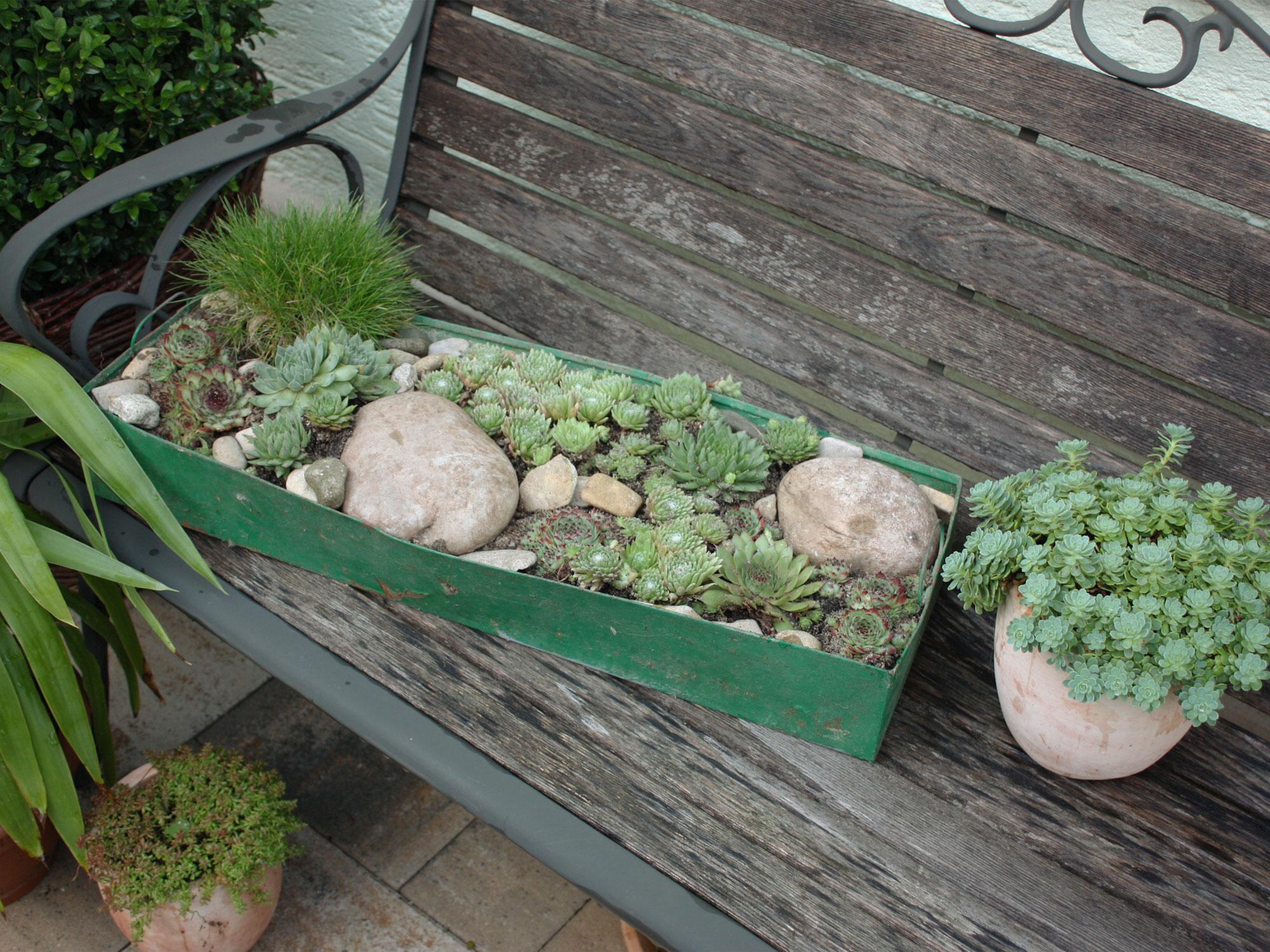 umpflanzen von kleinen topfpflanzen native plants gartenblog. Black Bedroom Furniture Sets. Home Design Ideas