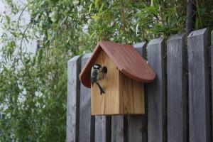 Blaumeise an unserem Vogelhaus aus Lärchenholz