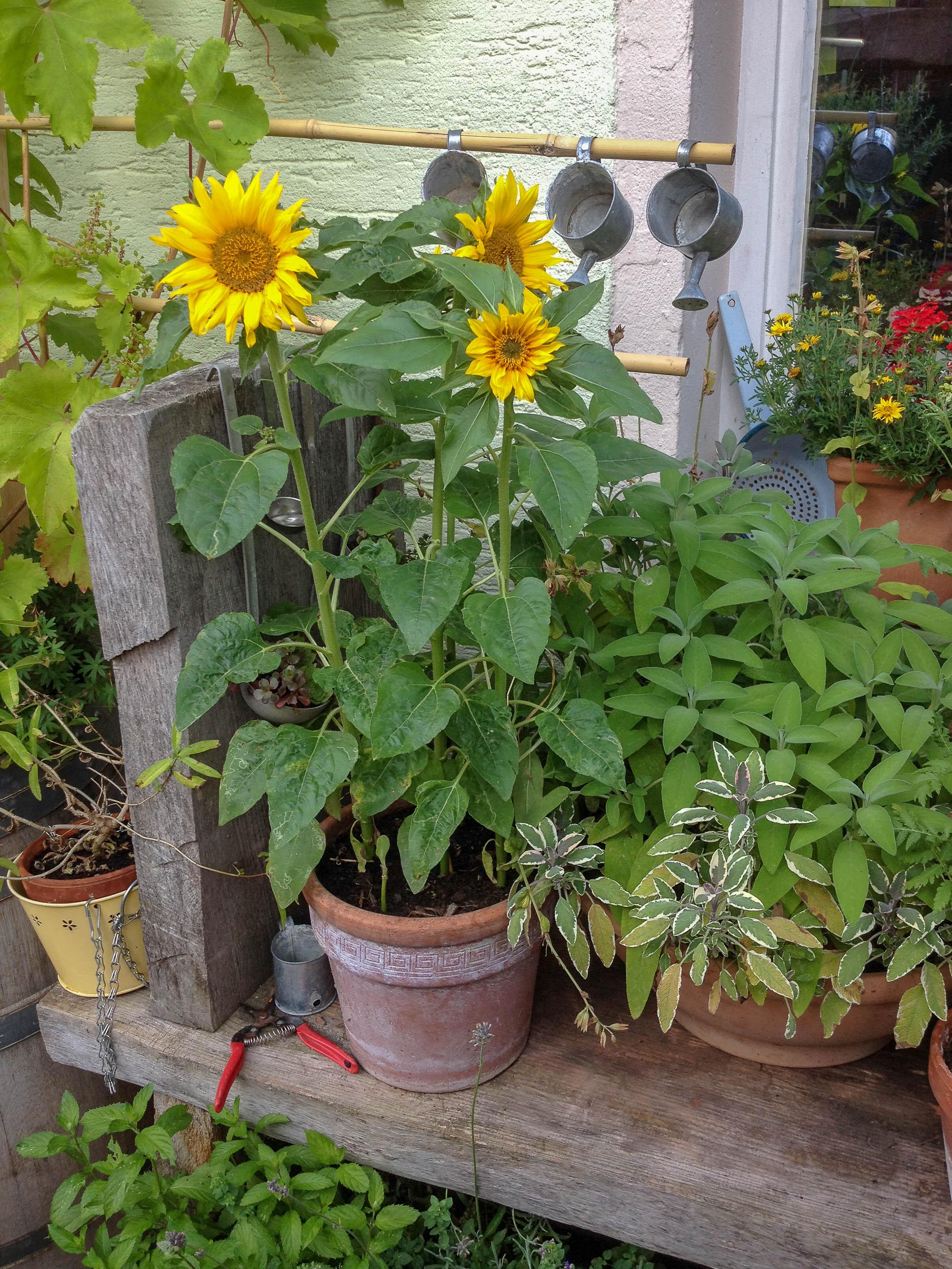 kleine b umchen f r den garten native plants gartenblog. Black Bedroom Furniture Sets. Home Design Ideas