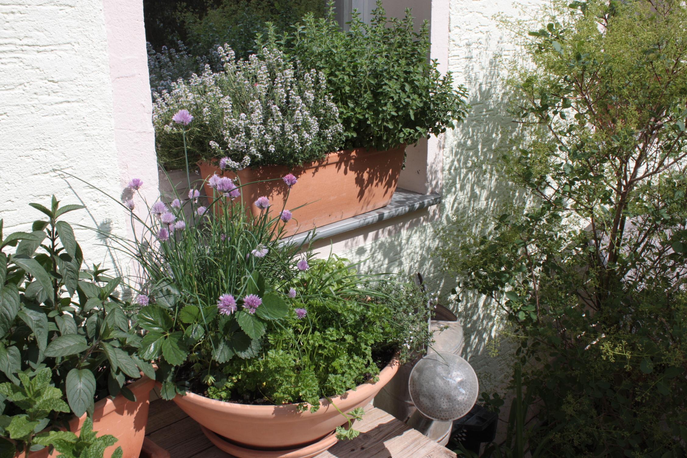 Mit k belpflanzen balkon und terrasse in eine wohlf hloase for Winterharte kubelpflanzen terrasse