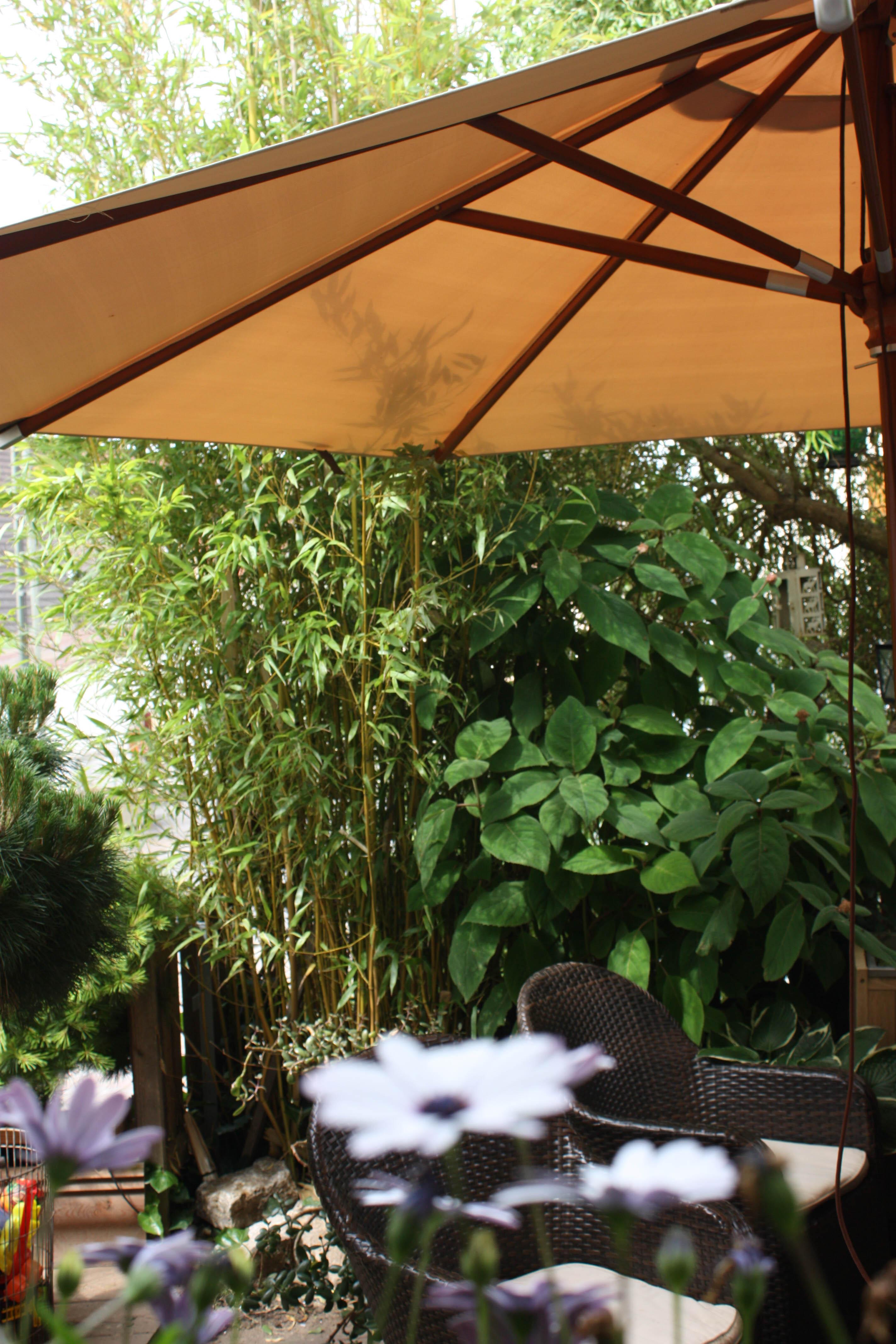 moderne pflanzk bel f r balkon terrasse und garten native plants gartenblog. Black Bedroom Furniture Sets. Home Design Ideas