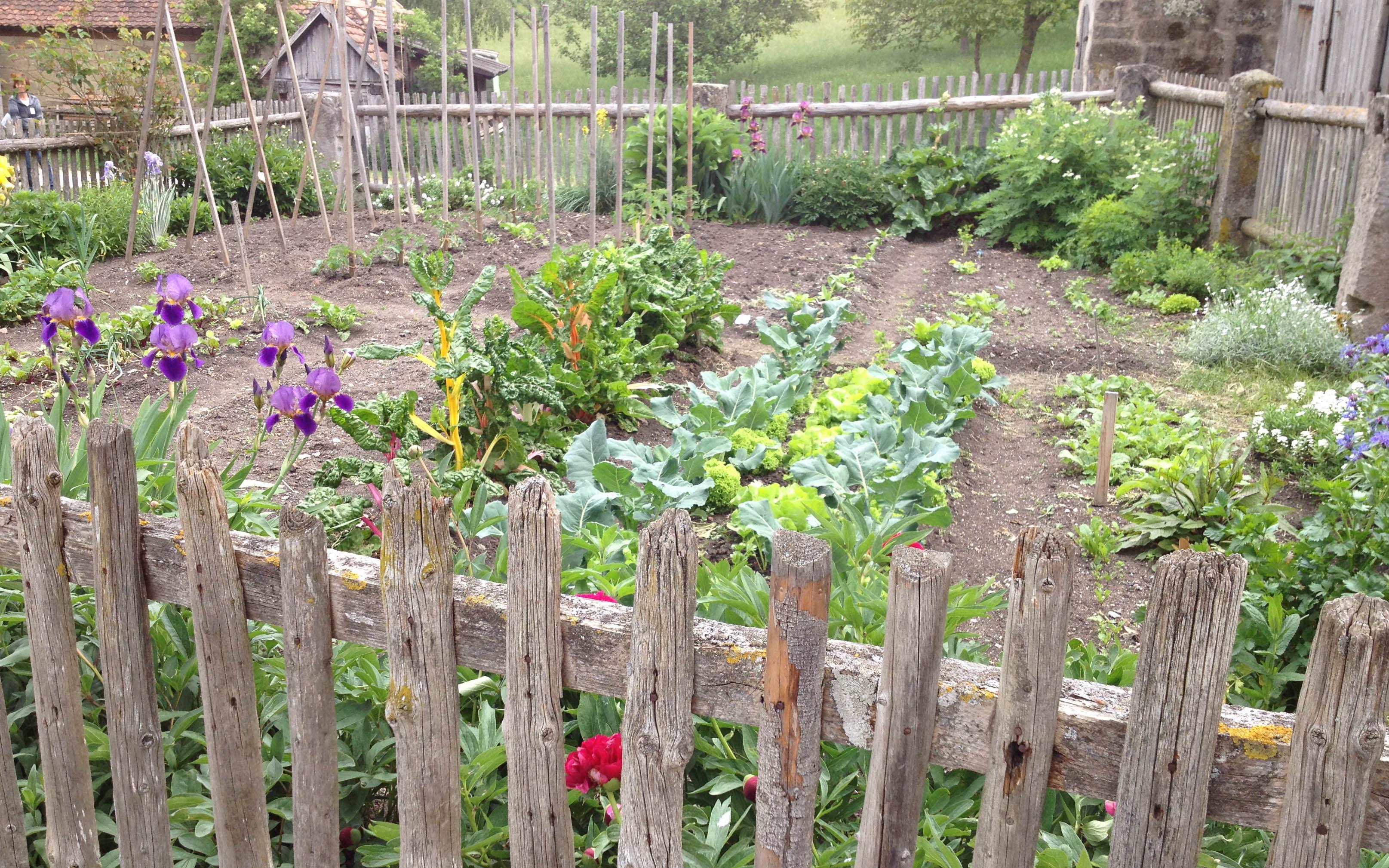 so wird das gras wieder gr n tipps f r den gesunden rasen native plants gartenblog. Black Bedroom Furniture Sets. Home Design Ideas