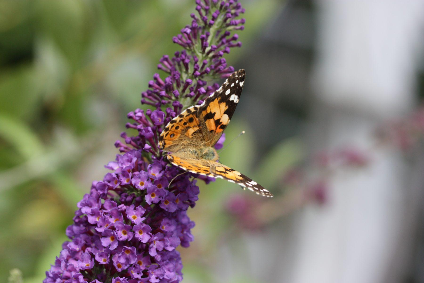 Lebensraum Garten Erwünschte Gartenbewohner Anlocken Und