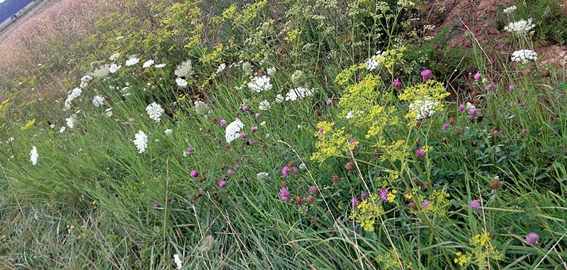 Blumenwiese-im-Garten