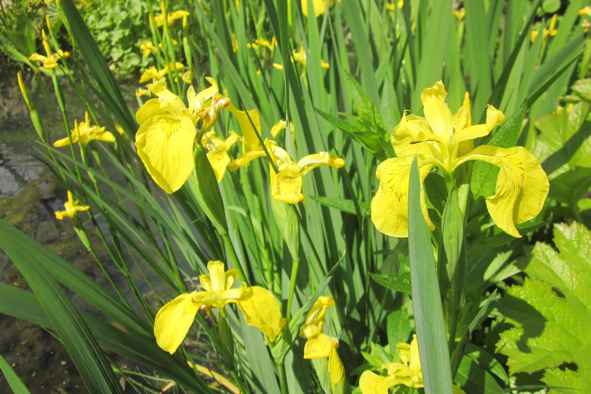 Iris – Die Göttin des Regenbogens wird gekürt!