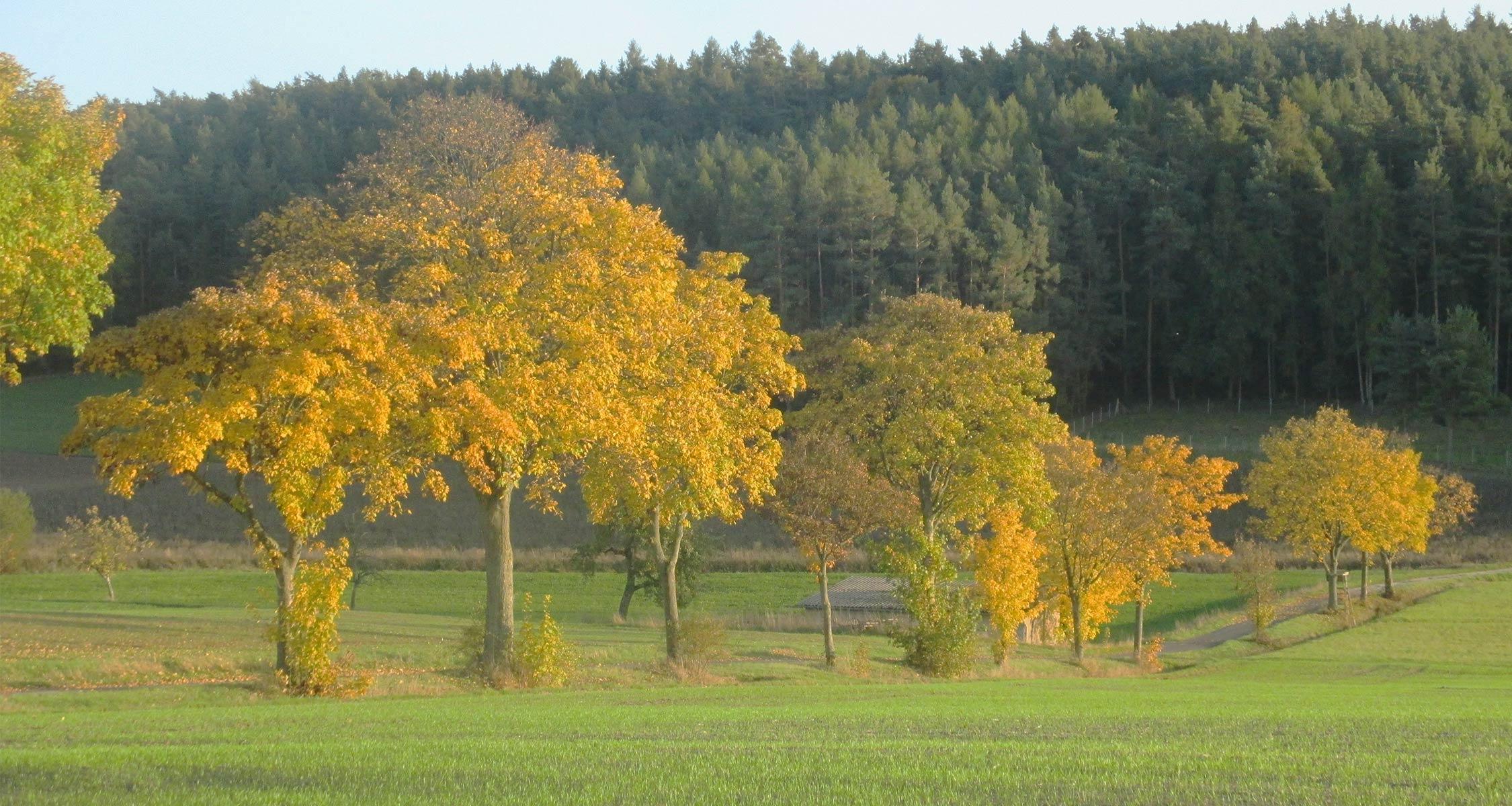 EM Anwendungen im Herbst