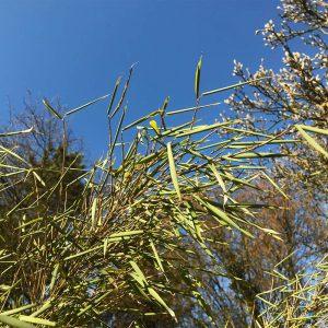 Pflanzen Vor Den Aktuellen Starkfrosten Schutzen Native Plants