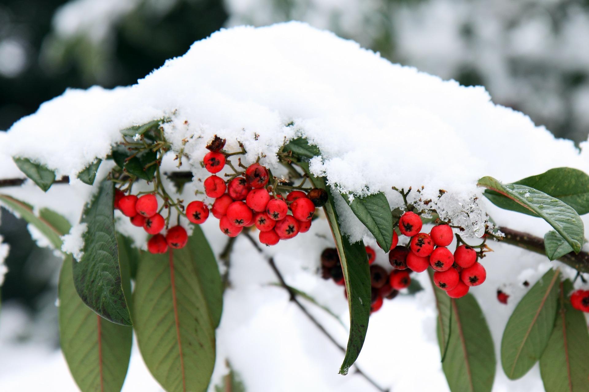 Aktuelle Informationen zum Pflanzenversand