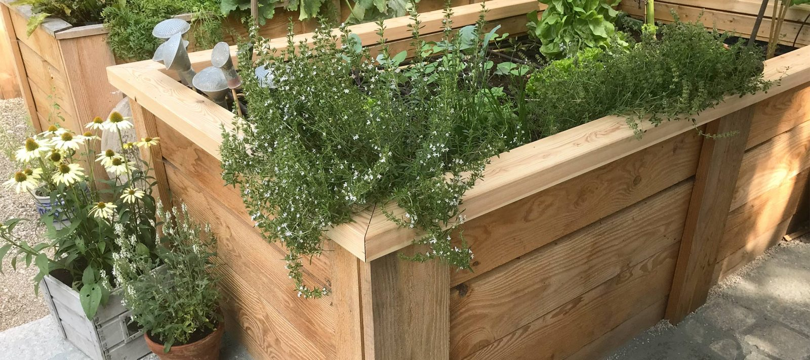 unser gem segarten iii native plants gartenblog. Black Bedroom Furniture Sets. Home Design Ideas