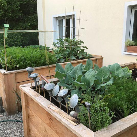 Eine Bewasserung Fur Unsere Hochbeete Native Plants Gartenblog
