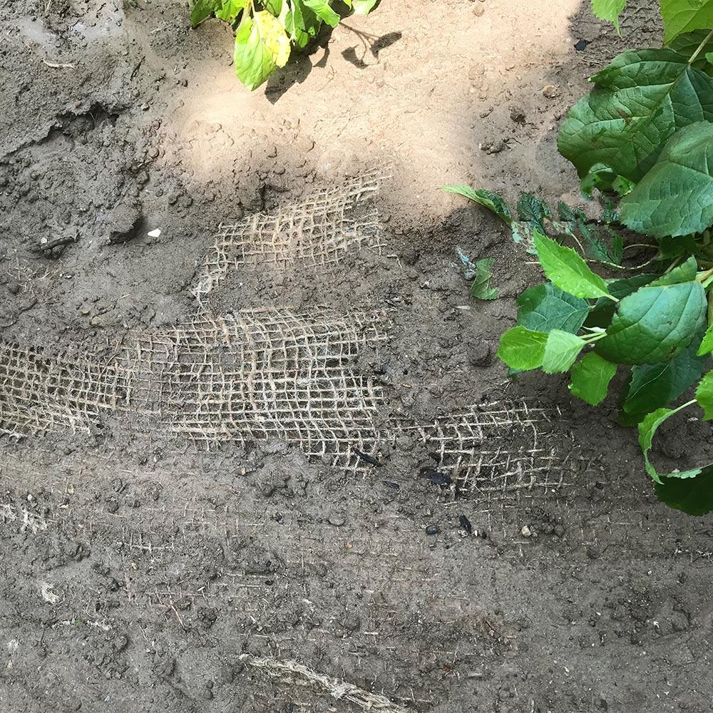 Jutegewebe nach der Pflanzung - durch das gießen schwemmt sich auch das Gewebe in den Boden und gibt diesem den nötigen Halt