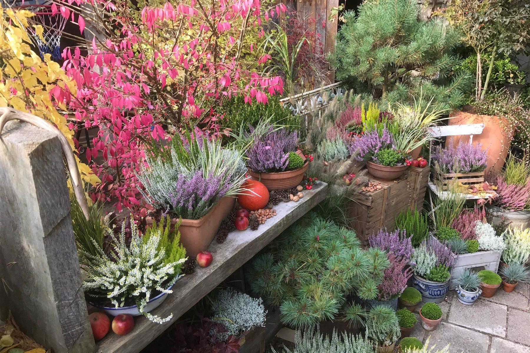Kübelpflanzen Herbst