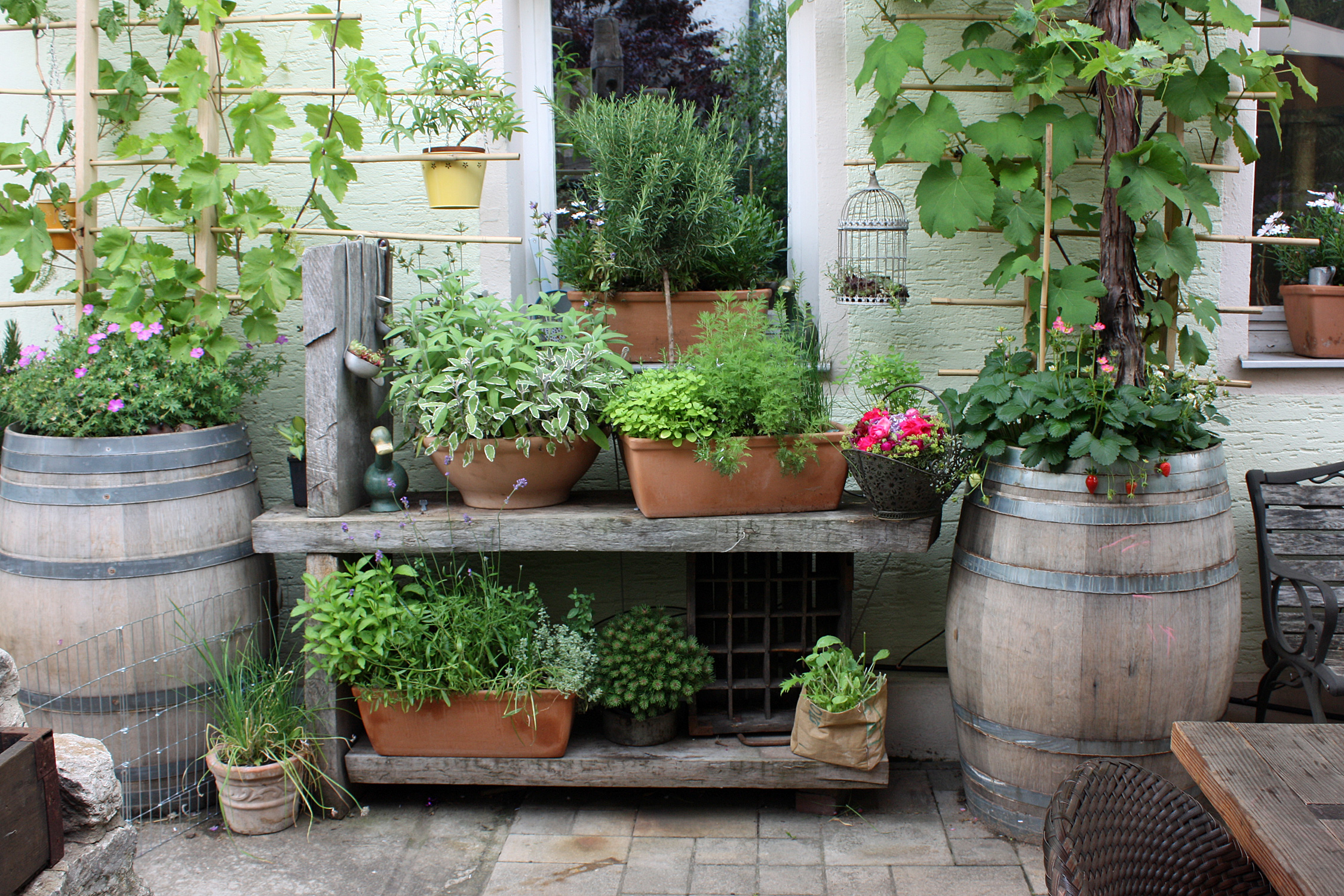 mit k belpflanzen balkon und terrasse in eine wohlf hloase verwandeln native plants gartenblog. Black Bedroom Furniture Sets. Home Design Ideas