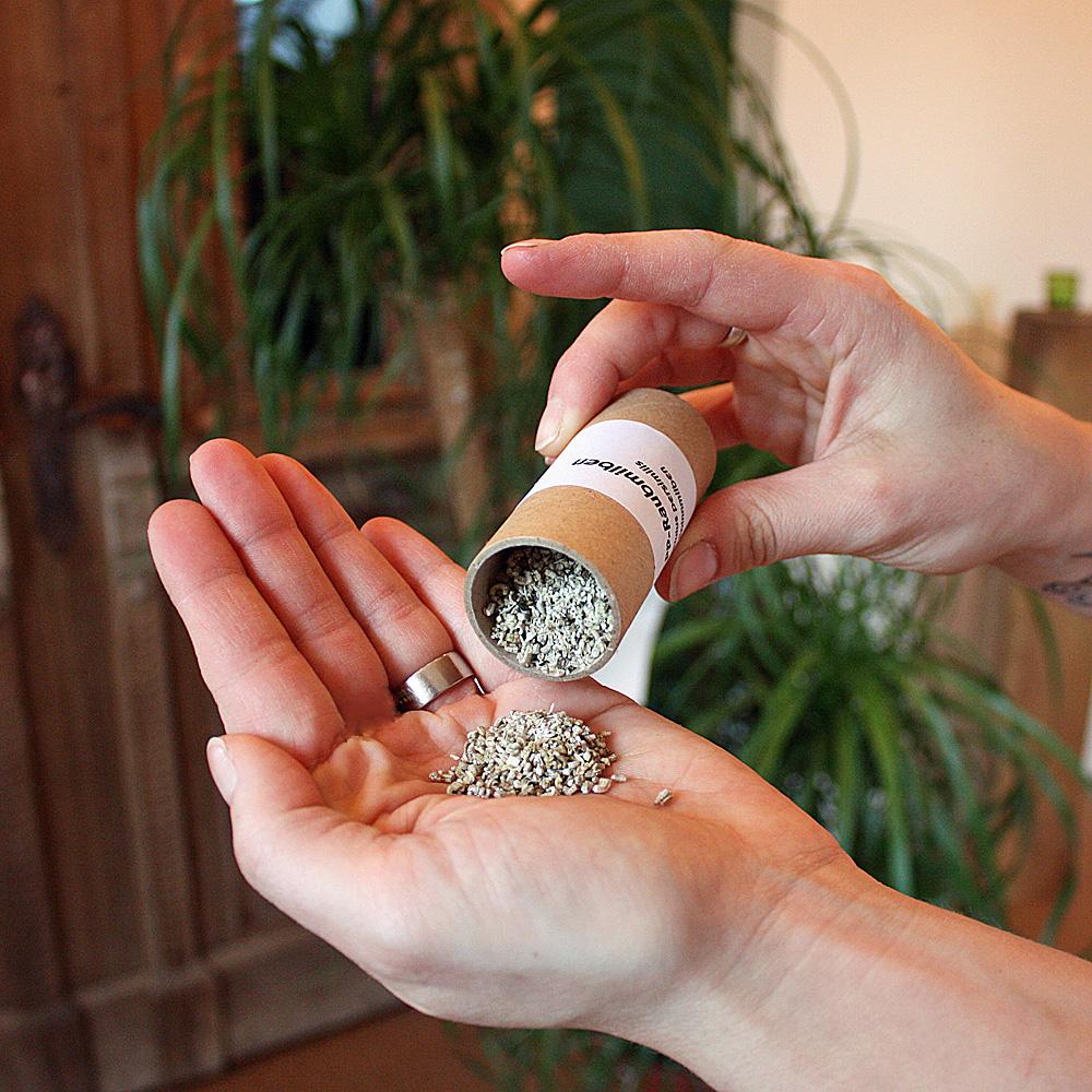 Raubmilben mit Trägermaterial im Versandröhrchen
