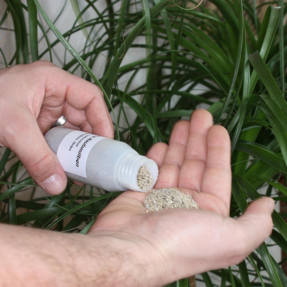 ACA Raubmilben mit Trägermaterial