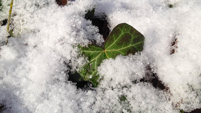 Schädlinge im Winter: Zurückgezogen, aber nicht unschädlich