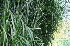 Schöne Sichtschutzpflanzen für den Garten