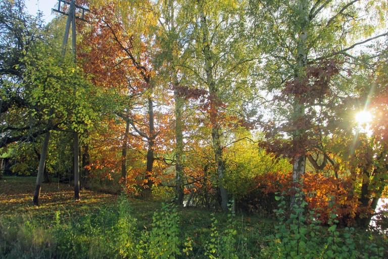 Aktuelle Gartenarbeiten im November