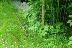 Bambus ausläuferbildend
