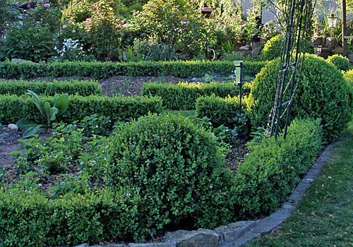 Einfassungspflanzen für Ihren Garten
