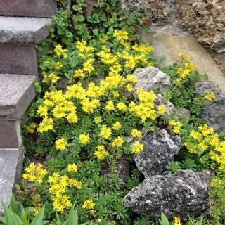 Steingarten Bepflanzen - Hier finden Sie passende Pflanzen | Native ...