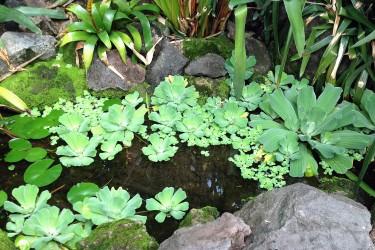 Teichpflanzen für jede Wassertiefe
