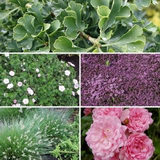 Vorschau: Pflanzenset für Grabbepflanzung in sonniger Lage