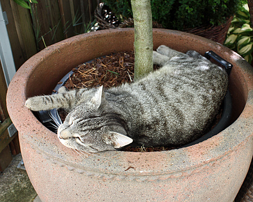 Katze im Gartenkübel