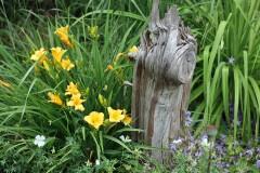 Gärtnertipp Taglilien