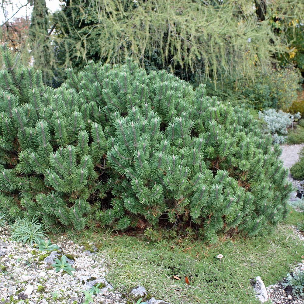 steingarten bepflanzen - hier finden sie passende pflanzen, Garten ideen gestaltung