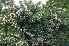 Blütenhecke oder Sträucherhecke anlegen