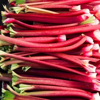 Himbeer-/ Erdbeer-Rhabarber 'Frambozen Rood'