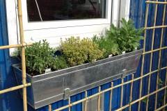 Pflanz- & Pflegeanleitung Balkonkästen und kleine Töpfe