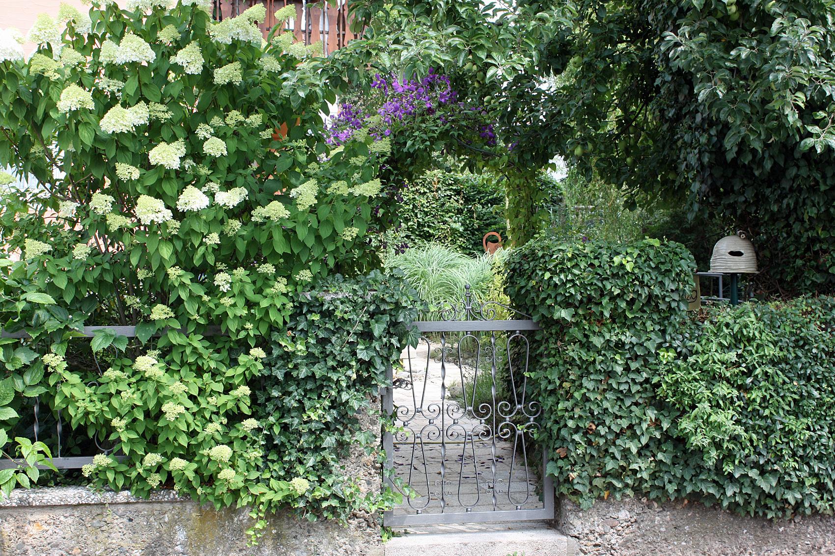 kugelb ume f r den vorgarten bild kugel trompetenbaum seite familienheim strukturgebende str. Black Bedroom Furniture Sets. Home Design Ideas