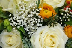 Stauden, Gräser und Blattschönheiten für die Blumenvase