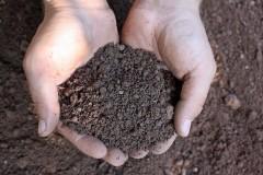 Passende Gehölze für die verschiedenen Bodenarten