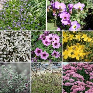 Vorschau: Pflanzenset für Balkonkästen in vollsonniger Lage