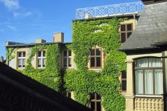 Kletterpflanzenvielfalt und Fassadenbegrünung