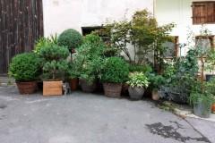 Pflanz- & Pflegeanleitung Kübelpflanzen