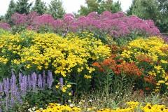 Unsere Empfehlung für Ihr Blumenbeet und für die Rabatte