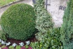 Geeignete Pflanzen für die Grabbepflanzung