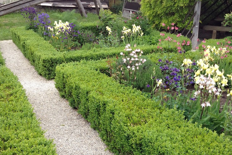 Einfassungspflanzen für den Garten