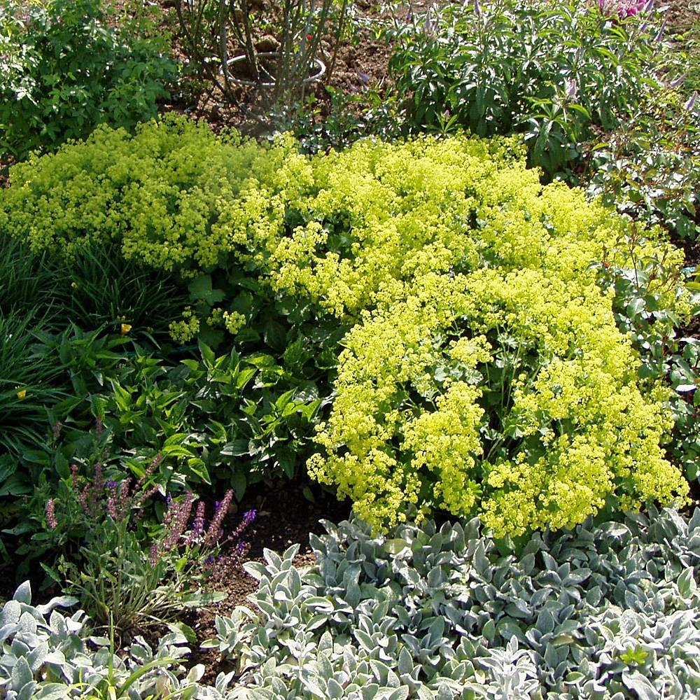 Steingarten Bepflanzen Hier finden Sie passende Pflanzen