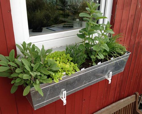 Balkonkasten mit Kräutern bepflanzen