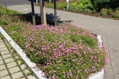 Robuste Pflanzen für eine Unterbepflanzung