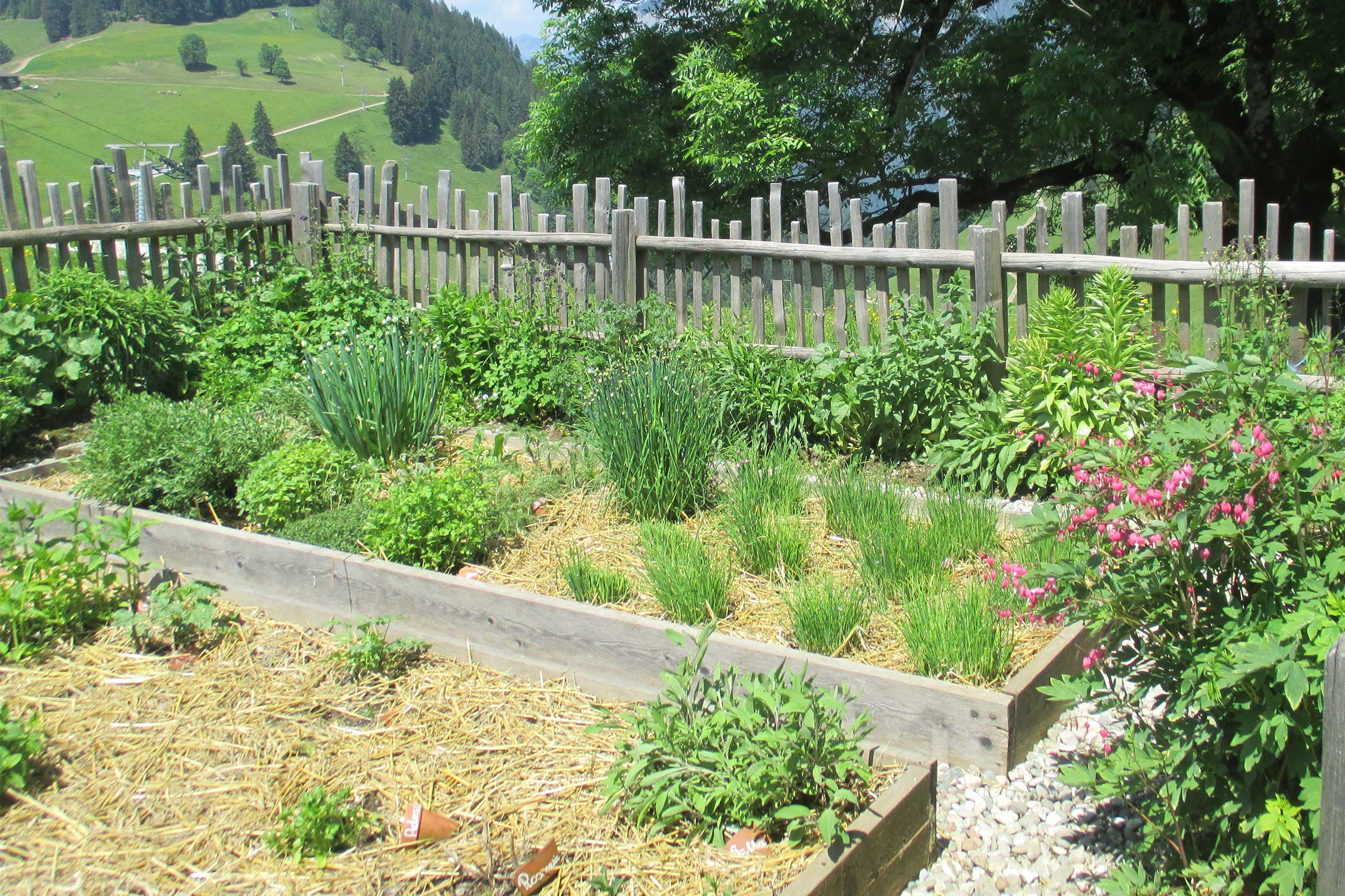 mulchen im garten native plants. Black Bedroom Furniture Sets. Home Design Ideas
