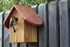 Heimische Vogelwelt