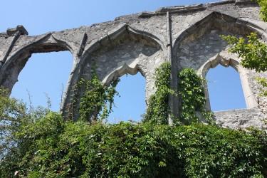 Kletterpflanzen für Garten und Balkon