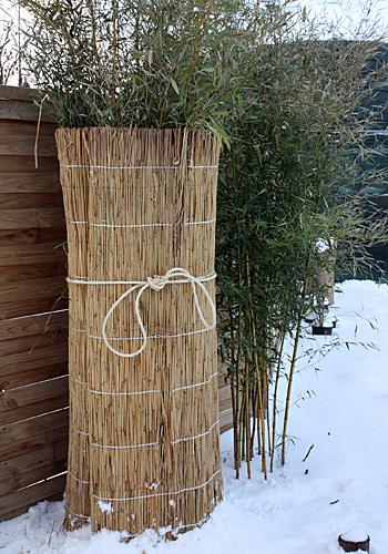 Winterschutz an Bambus im Garten